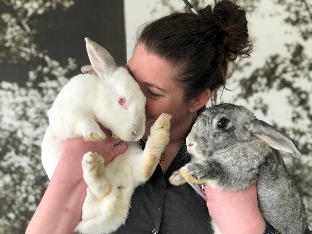 Alphington Fairfield Vet - Experienced Rabbit Vets